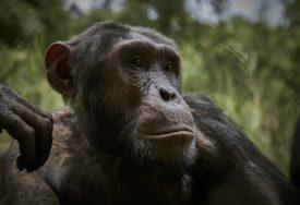 OSTAO BEZ ŽESTE PA KRENUO U KRVOLOČNI POHOD Majmunu alkoholičaru doživotni zatvor zbog ubistva