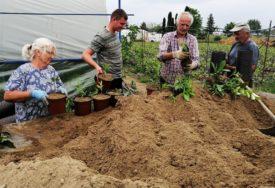 SVI RADNICI STARIJI OD 65 GODINA Pune ruke posla na njivama i baštama u Lijevču