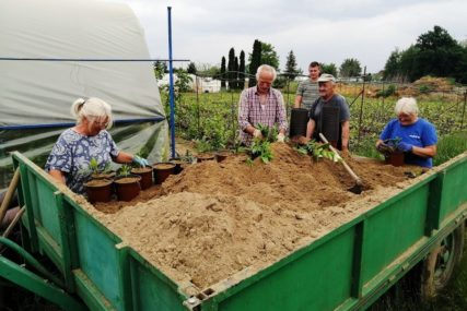 JEDNA OD NAJBOLJIH GODINA ZA DOMAĆI AGRAR Voće podbacilo, ali odličan prinos žitarica i povrća