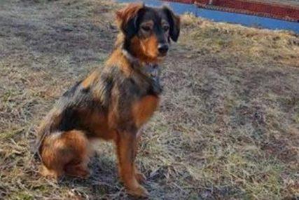 SUZBIJANJE BOLESTI Vakcinisano 110 pasa u okviru borbe protiv bjesnila