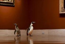 VIDEO KOJI JE IZMAMIO OSMIJEH MNOGIMA Pingvini u posjeti muzeju oduševljeni slikama