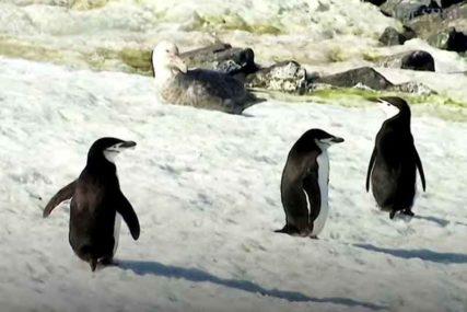 """UPALJEN ALARM Naučnici upozoravaju: Topljenje Antarktika dovešće do """"katastrofalnog"""" rasta nivoa mora"""