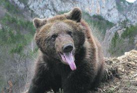 Banjalučani OČI U OČI s medvjedom: Šetnja na Starčevici završila neočekivanim susretom