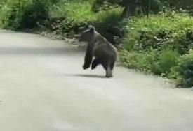 ODUŠEVIO INTERNET Snimak malog medvjeda je NEŠTO NAJSLAĐE što ćete danas vidjeti
