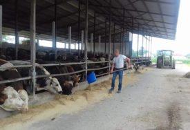 MUKE FARMERA U SEMBERIJI Utovljeni bikovi tri mjeseca čekaju kupce