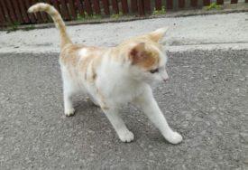 Zaražena mačka UGRIZLA VLASNICU PA UGINULA: Evo zašto je slučaj PRIVUKAO PAŽNJU VLASTI