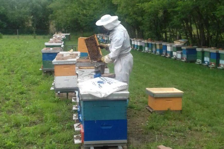 DOMAĆEG MEDA JEDVA ZA LIJEKA Još jedna katastrofalna godina za pčelarstvo