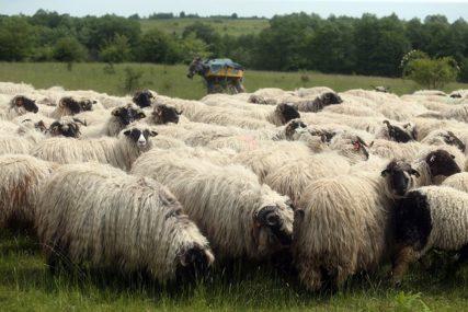 PRIVEDENI LOPOVI U DOBOJU Ukrali ovcu, pa je prodali