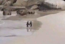 NEODOLJIVI PAR RAZGALIO MNOGA SRCA Zaljubljenost ova dva pingvina je gotovo nestvarna (VIDEO)