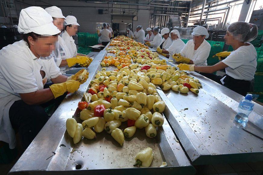 POČINJE OTKUP Pašalić: Očekujemo oko 20 hiljada tona povrća