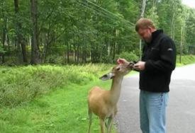 OVO NIKO NIJE OČEKIVAO Tokom šetnje je naišao na jelena, prišao mu je i PRUŽIO RUKU (VIDEO)
