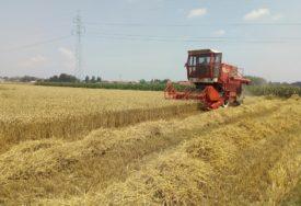 ŽETVA U PUNOM JEKU Dobar rod i organizovan otkup pšenice u Kozarskoj Dubici