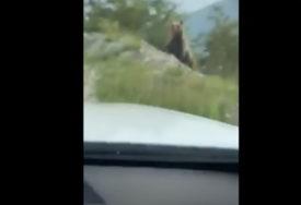NESVAKIDAŠNJA SCENA U BiH Medvjed prošetao putem ka planini Vlašić (VIDEO)