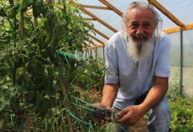 KOD NJEGA IMA I PLAVOG PARADAJZA Nenad je uzgajivač posebnih sorti povrća i voća