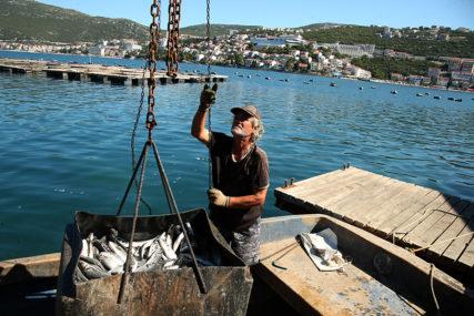 U pripremi novi zakon: Uzgojom ribe u Srpskoj moći će da se bave i građani