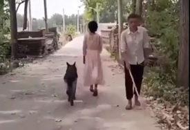 PAS VELIKOG SRCA Ugledao slijepca i vratio se da pomakne granu s puta (VIDEO)