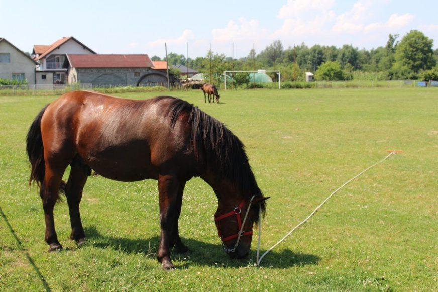 Nespretni muškarac zbog konja ZAVRŠIO U BOLNICI: Udvarao se ženi, pa ostao BEZ NOSA