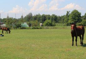 FUDBAL U DOBA KORONE U SRPCU Igrači na odmoru, a konji na terenu