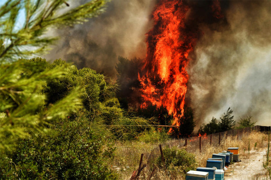 BUKTINJA KOD TREBINJA Požar u Poljicama najvećim dijelom lokalizovan