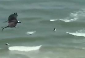 NEVJEROVATAN SNIMAK Orao je ZGRABIO AJKULU i preletao plažu (VIDEO)