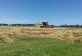 BRINE IH SAMO CIJENA Prinosi pšenice dobri, zarada pod znakom pitanja