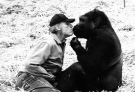 PRIJATELJSTVO NE POZNAJE GRANICE Dirljiv susret čovjeka i gorile nakon pet godina (VIDEO)