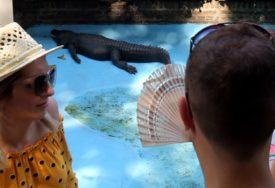 MUJA STIGAO PRIJE 83 GODINE U ZOO VRT Najstariji američki aligator na svijetu živi u Beogradu