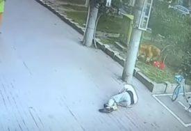PRIZOR OD KOJEG HVATA JEZA Mačka pala čovjeku na glavu, ostao bez svijesti (VIDEO)