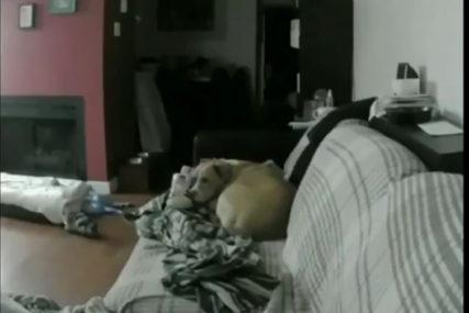 TOPI I NAJTVRĐA SRCA Kamere snimile šta pas radi kad njegov vlasnik nije kod kuće