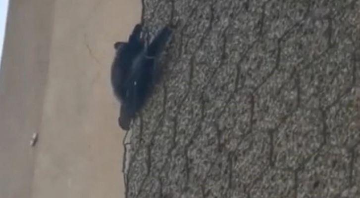 SLIJEPI MIŠ POPUT SPAJDERMENA Odmarala je na terasi i ugledala prizor od kojeg ZASTAJE DAH (VIDEO)
