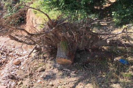 """""""Za zeleniju i održivu budućnost"""" Do kraja godine u Prijedoru biće zasađeno hiljadu sadnica drveća"""