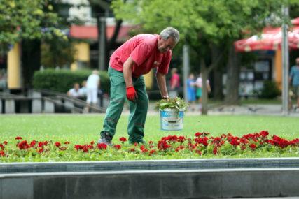 VIŠE OD UKRASA Okružite se cvijećem, pozitivno utiče na raspoloženje (FOTO)