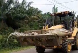 REPTIL TERORISAO MJEŠTANE, A ONI SE OSVETILI Uhvatili krokodila teškog pola tone i prevezli kroz selo u buldožeru (VIDEO)