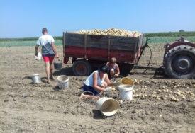 KVALITETOM OSVAJAJU TRŽIŠTE Poljoprivrednici iz sela kod Bijeljine zadovoljno trljaju ruke