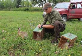 MLADI ZEČEVI DRŽE BALANS U PRIRODI Lovci obogaćuju lovišta u okolini Gradiške