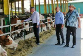 VRIJEDNOST PROJEKTA MILION MARAKA Proizvođačima mlijeka uskoro 200 gravidnih junica