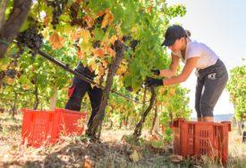 NOVE INVESTICIJE ZA NOVO ZLATO EU pomaže modernizaciju vinarstva u BiH