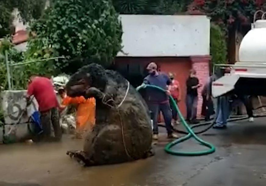 """PRONAĐENA """"RATZILLA"""" U MEKSIKU Čistili kanalizaciju, pa ostali šokirani otkrićem DŽINOVSKOG ŠTAKORA (VIDEO)"""