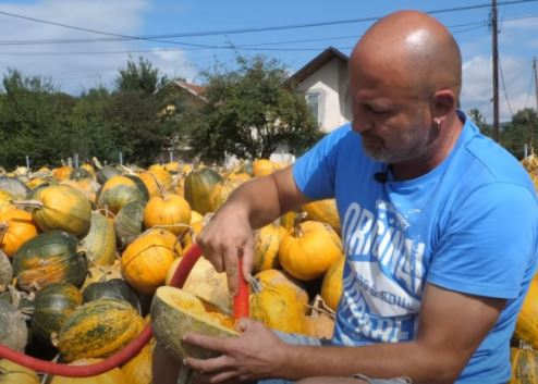 KORISTAN IZUM Dragan usisivačem izvadio košpice iz 150 tona tikve (VIDEO)
