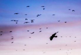 NEOBIČNO SAZNANJE IZNENADIĆE MNOGE Otkriveno da li ptice imaju SUBJEKTIVNU STVARNOST