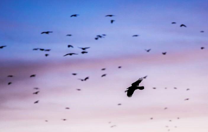 PRIRODA JAČA OD TEHNOLOGIJE Ptica letom iznad Pacifika oborila svjetski rekord