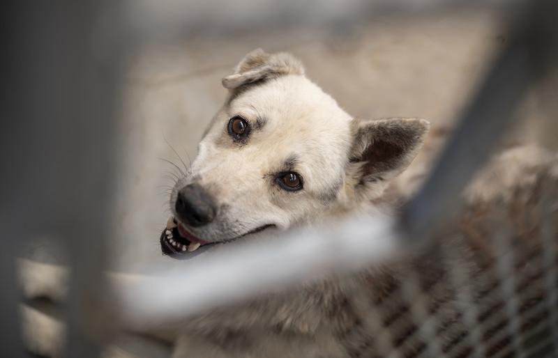 UŽAS U PETROVU Pas izujedao dvije osobe, jedna od njih DIJETE