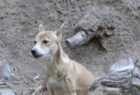 SVI U LANCIMA, NA NJIMA KOST I KOŽA Muškarac zatočio više životinja na SALAŠU STRAVE