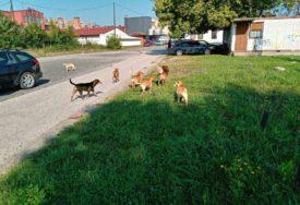 GLAVOBOLJA ZBOG PASA LUTALICA Komunalci o problemima nakon napada na djevojčicu u Prijedoru