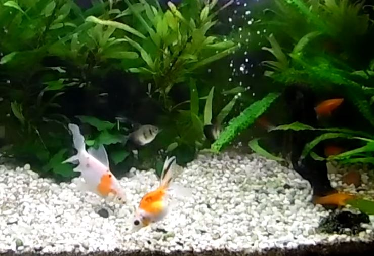 ŽIVOTINJE ĆE BITI ZBRINUTE U ZOOLOŠKOM VRTU Pokušali da krijumčare 220 akvarijumskih ribica