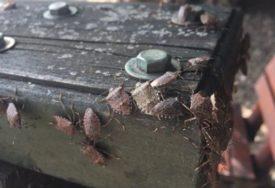 MJEŠTANI DANIMA VODILI BORBU SA BUBAMA Priroda se pobrinula za ove insekte, riješila veliki problem ovih ljudi