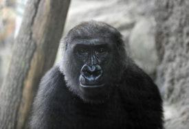 ČOVJEK GLAVNI KRIVAC Sve manje životinjskih vrsta na svijetu