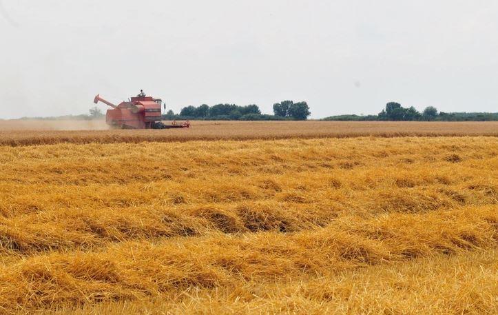 NJIVA KOŠTA KAO KUĆA Divljaju cijene zemlje, hektar ide i do 100.000 evra
