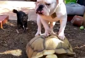 URNEBESNI SNIMCI Ove životinje su pravi HIT na internetu (VIDEO)