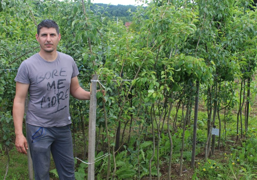 ORGANSKA PROIZVODNJA NA DOMAĆI NAČIN Stare sorte voća ponovo moderne u Potkozarju